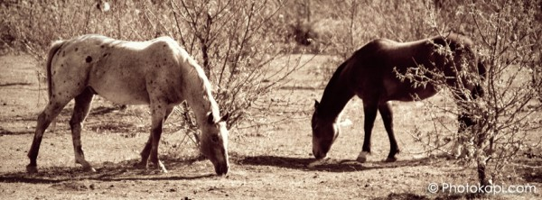 Facebook Cover Photo Horses