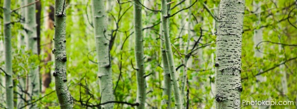 Facebook Cover Photo Aspens