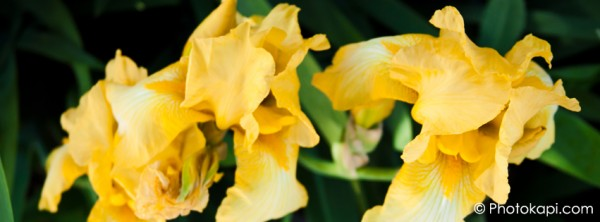 Facebook Cover Photo Iris