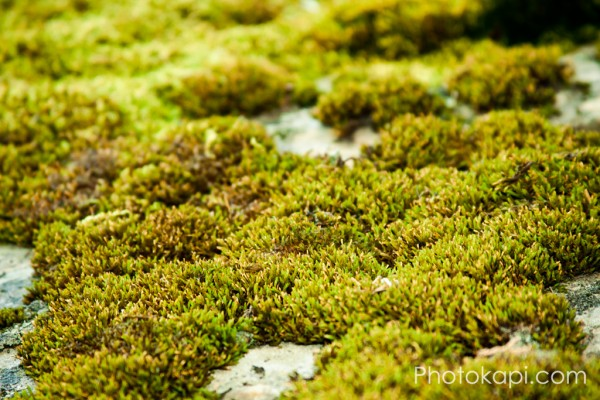 Rock Moss in American Fork Canyon