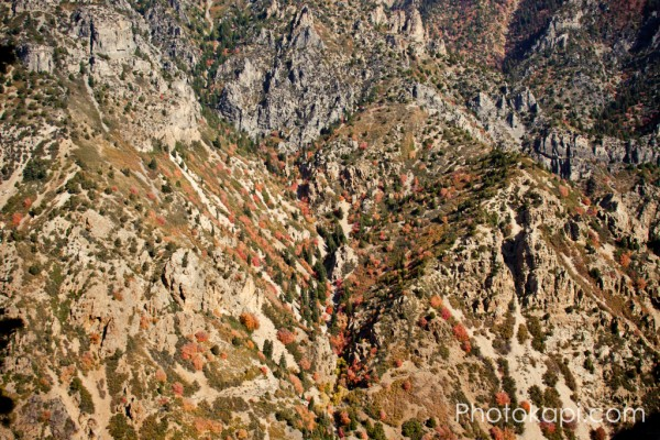 Autumn Leaves in American Fork Canyon