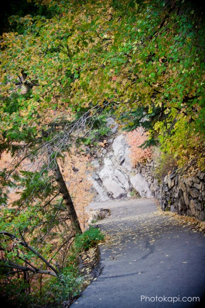 Timp Trail, Autumn Leaves in American Fork Canyon