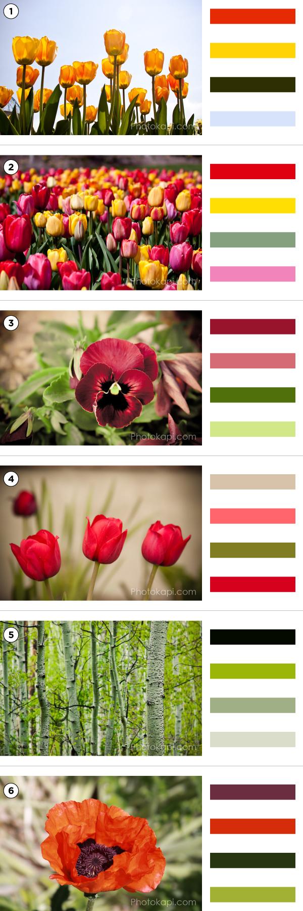 Springtime Color Palettes