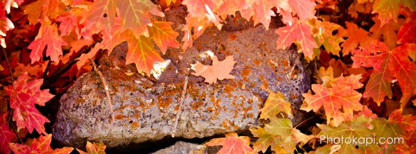 Fall Themed Facebook Cover Photos | Photokapi.com
