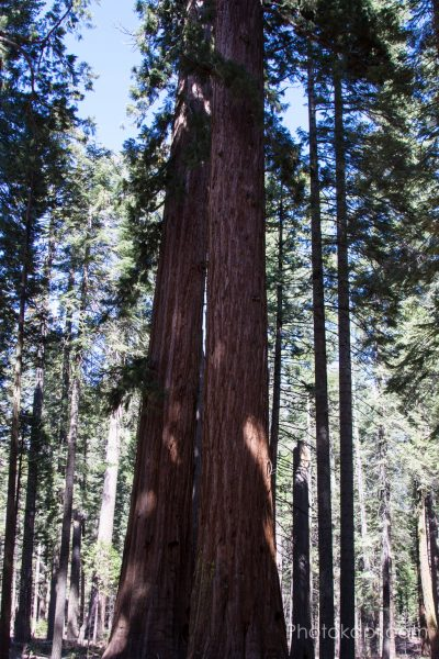 Big Tree State Park, California - Photokapi.com