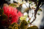Hawaii | Photokapi.com