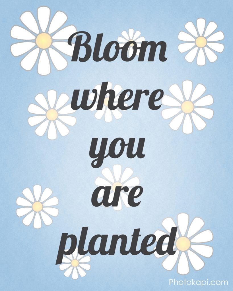 Bloom Where You Are Planted | Photokapi.com