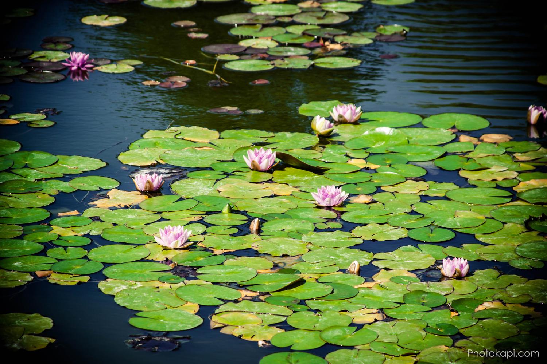 Thanksgiving Point Ashton Gardens | Photokapi.com